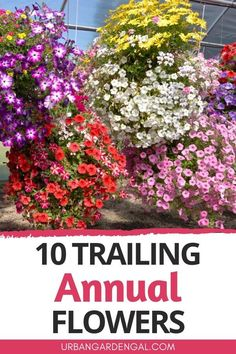 Trailing annual flowers look great when planted in hanging baskets, window boxes, containers and retaining walls. Here are 10 beautiful trailing annuals for your flower garden. #annuals #flowers #flowergarden