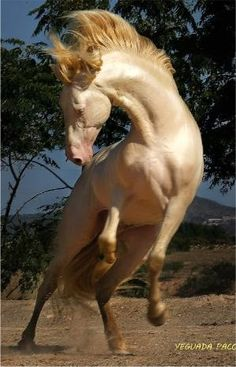 What a beautiful Horse !