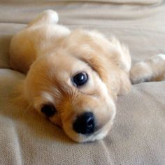 Cutest Puppy Ever!