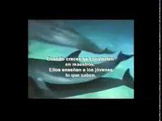 (1) MOTIVACIONAL: TRABAJO EN EQUIPO - YouTube