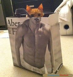 Cat in the Bag. and pretty much the only time I'll post an Abercrombie and Finch picture on pinterest. :D