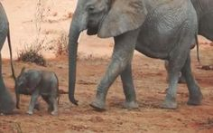 <p>It's easy to lose sight of the light at the end of the tunnel when dealing with a complex issue like this which is what makes this short video so important. Seeing this happy, carefree herd of elephants – even for four seconds – is enough to remind us WHY the fight is worth it.</p>