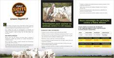 Campanha Contra a Folder - Febre Aftosa (2ª Etapa 2017) - Cliente Governo do Piauí / ADAPI Folder, Dates, Campaign