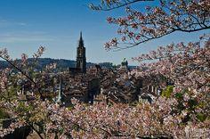 die Altstadt von Bern mit dem Münster (Aussicht vom Rosengarten)  //  the old town of Berne with the famous Muenster (as seen from the Rosengarten)