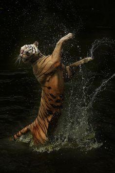 Happy dance :) @ Olivia Groves (taken by Cindy Budiono)