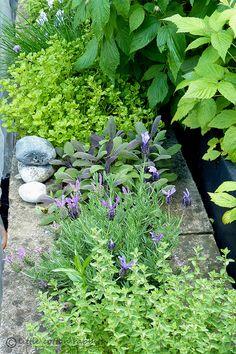 Herb garden in cinder blocks Easy Garden, Edible Garden, Side Garden, Succulents Garden, Garden Plants, Herb Gardening, Container Herb Garden, Herb Garden In Kitchen, Growing Herbs