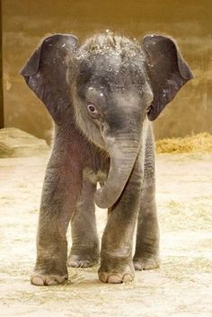 """""""Stop Singing Nellie the Elephant. I Am Not Packing My Trunk and I Am Not Saying Goodbye to the Circus!"""""""