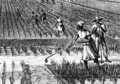 African Slaves' Contribution In Building America