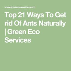 Top 21 Ways To Get rid Of Ants Naturally  | Green Eco Services