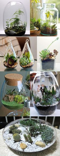 Ideas Mini Succulent Terrarium Gifts For 2019 Terrarium Plants, Succulent Terrarium, Cacti And Succulents, Planting Succulents, Planting Flowers, Terrarium Wedding, Decoration Plante, Cactus Y Suculentas, Plant Decor
