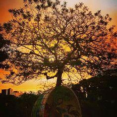 O pôr do sol mais bonito de Floripa não é nas praias, é na UFSC.  Repost da…