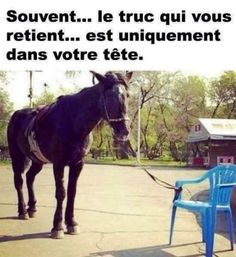 – Photos at the con – Art Of Equitation Subconscious Mind, Positive Mindset, Positive Attitude, Positive Quotes, Quote Of The Day, Decir No, Physics, Funny Jokes, Hold On