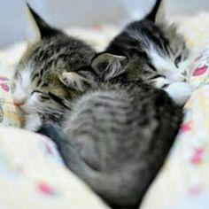 Vicini Vicini per la nanna più dolce ♡  Solo i gatti possono fare un ♡ perfetto con tanta semplicità   Dolci Sogni #a-mici !  #Buonanotte !   #Goodnight #Sleeptime #sleep #catsofinstagram #cats #instacat #cutecats #sweetcats #lovelovelove #lovecat #cats #pets #animals #photooftheday  #ilovemycat #nature #catoftheday #lovecats   #catsmylove #Repost #gatti #dolcigatti #dolcicuccioli #ioamoglianimali #MIAO :-)