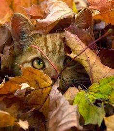 In the Rustling, of Autumn Leaves, One never Knows What they Might Find~