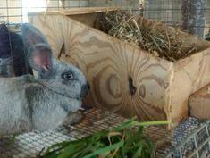 Nest Box Info - Brick House Acres Rabbitry Rabbit Nesting Box, Nesting Boxes, Rabbit Farm, Rabbit Colors, Nest Box, Genetics, Rabbits, Poultry, Bunnies