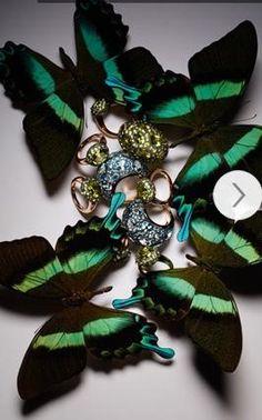 绿、褐相间的北美洲君主斑蝶则与Tabou系列微微闪亮的黄绿色橄榄石相映成趣;