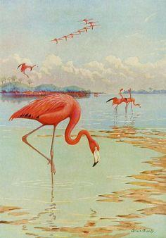 1930s Flamingo Print Bird Art Coastal Decor Beach by earlybirdsale, $4.00