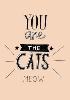 "the cat's meow - Archaic 1920s American slang that in various contexts refers to one or more of ""excellent"", ""stylish"", or ""impressive to the ladies"".  Synonymous with the cat's pyjamas and the bees' knees"