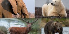 Trophy Hunters Gather At Safari Club International Convention To Bid On Big Game Kills | The Huffington Post