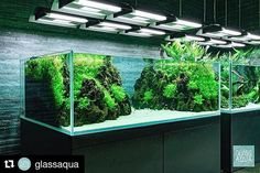 "122 mentions J'aime, 1 commentaires - ADA Shrimps (@ada.shrimps) sur Instagram: ""#Repost @glassaqua (@get_repost) ・・・ We're wondering how the electric bill is... the room was a lot…"""