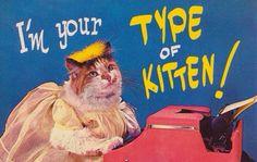 type of kitten #cat #typewritter #vintage