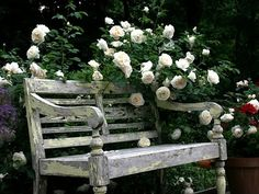 Roses with grey bench...