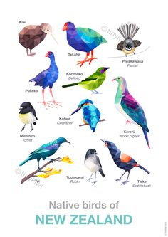 A2 New Zealand birds poster, Bird poster, Geometric birds, Geometric design, Kiwi, Bellbird, Tui art print, Educational art | Felt