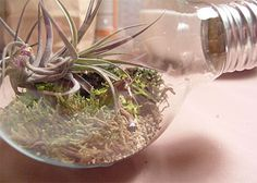Lightbulb terrarium