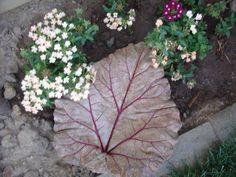 Rhubarb Leaf  Cement Birdbath or Dish  Indoor Outdoor by x10son, $75.00