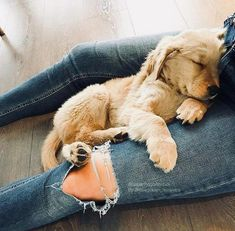 Astonishing Everything You Ever Wanted to Know about Golden Retrievers Ideas. Glorious Everything You Ever Wanted to Know about Golden Retrievers Ideas. Golden Retrievers, Dogs Golden Retriever, Retriever Puppy, Animals And Pets, Baby Animals, Cute Animals, I Love Dogs, Cute Dogs, Mans Best Friend