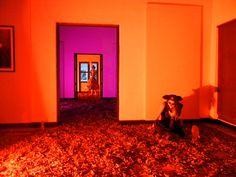 Pirata fantasma dentro de Galería Ángela Peralta