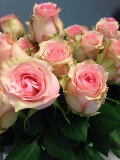 Norsk navn: Rose 'Soduko' Botanisk navn: Rosa 'Soduko'