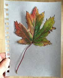 Image result for maple leaf drawing