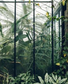 ^^Visit the webpage to read more on greenhouse panels. Check the webpage to find out more** Viewing the website is worth your time. Plant Aesthetic, Nature Aesthetic, Aesthetic Green, Greenhouse Panels, Nature Architecture, Magic Places, Gazebos, Plants Are Friends, Green Plants