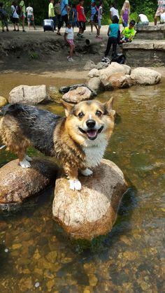 Gus at Minnehaha Falls