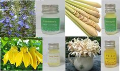 essential oil pure lot fragrance aroma burner by candoall Essential Oil Set, Lemon Grass, 100 Pure, Fragrance, Essentials, Pure Products, Food, Eten, Lemon Balm