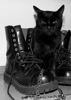 The Everyday Goth That cat looks like it's judging me