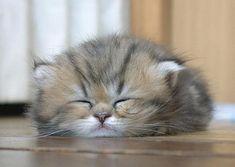 Cute kitten sleeping! Love it!