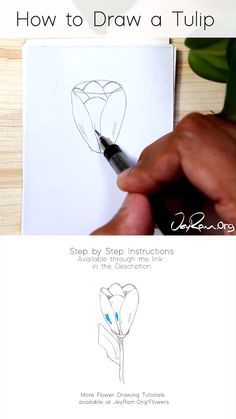 Learn how to draw tulip (flowers) with this simple step by step tutorial made for beginners. These pencil sketches are perfect for your bullet journals and sketchbooks, join me on this artistic…More Pencil Drawings For Beginners, Pencil Art Drawings, Art Drawings Sketches, Easy Drawings, Beginner Sketches, Colorful Drawings, Flower Drawing Tutorials, Flower Sketches, Art Tutorials