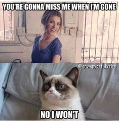 51 Ideas for Funny Comebacks Meme Grumpy Cat - 51 Ideas for Funny Comebac . - 51 ideas for funny comebacks meme grumpy cat – 51 ideas for funny comebacks meme grumpy cat - Grumpy Cat Quotes, Funny Grumpy Cat Memes, Funny Animal Jokes, Cat Jokes, Funny Animal Pictures, Funny Cats, Cat And Dog Memes, Really Funny Memes, Stupid Funny Memes