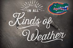 Go Gators, University of Florida, Gainesville, in all kinds of weather Fla Gators, Florida Gators College, Florida Gators Football, University Of Florida, Gator Football, Florida Girl, Football And Basketball, Weather, My Love