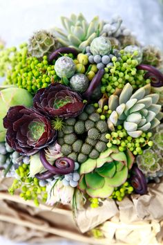 Bouquets with succulents,scabiosa pods, fiddle heads etc.