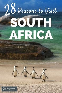 Why you should visit South Africa; a country that offers everything from the cosmopolitan vibe of Cape Town to the natural thrill of an African safari. Top bucket list experiences for your trip! | Blog by The Planet D: Canada's Adventure Travel Couple