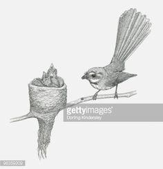 black-and-white-illustration-of-grey-fantail-and-young-in-nest-on-illustration-id98359309 (405×422) Black And White Illustration, Stained Glass, Nest, Owl, Mindfulness, Birds, Grey, Animals, Nest Box