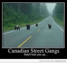 watch out for canadian street gangs