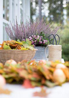 Fall beauty • Autumn • ♕