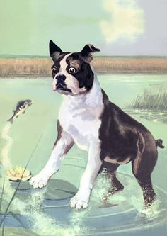Boston Terrier in Vintage Postcard
