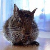 Švajčiarske syrové špízy so šunkou (fotorecept) - recept Naan Flatbread, 20 Min, Pizza, Cats, Animals, Profile, Gatos, Animales, Animaux