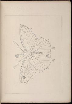 The Aurelian :. London :Henry G. Bohn ...,1840.. biodiversitylibrary.org/page/39060153