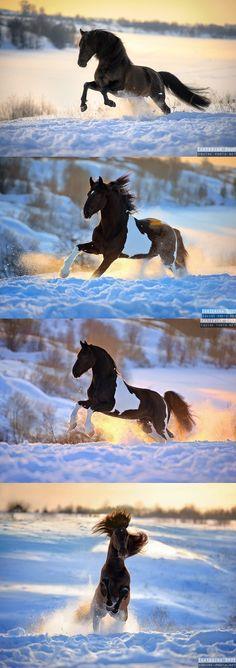 Snow day! Photo Ekaterina Druz